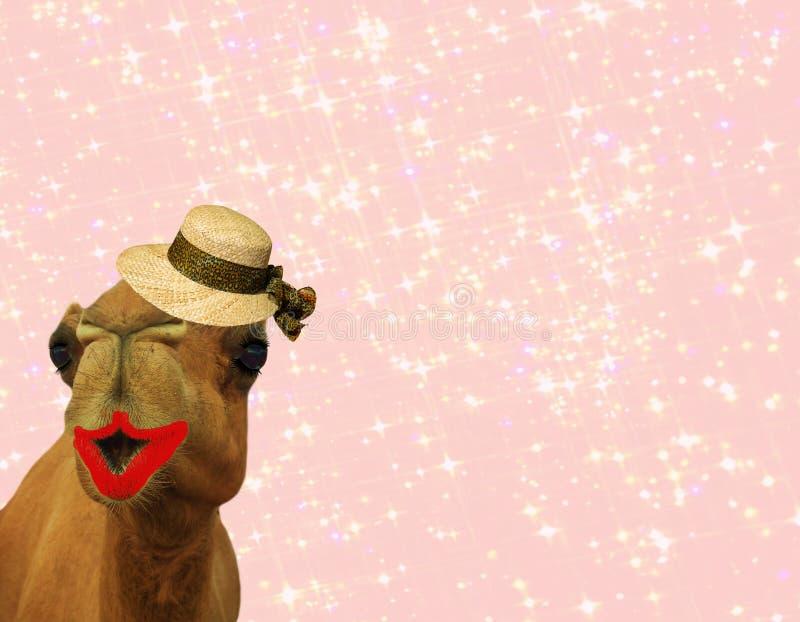 Komicznie wielbłądzi jest ubranym makeup i słomiany kapelusz odizolowywający na girly glittery różowym tle zdjęcia stock