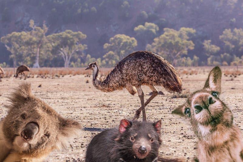 Komiczny kolaż Australijscy rodzimi zwierzęta zdjęcia royalty free