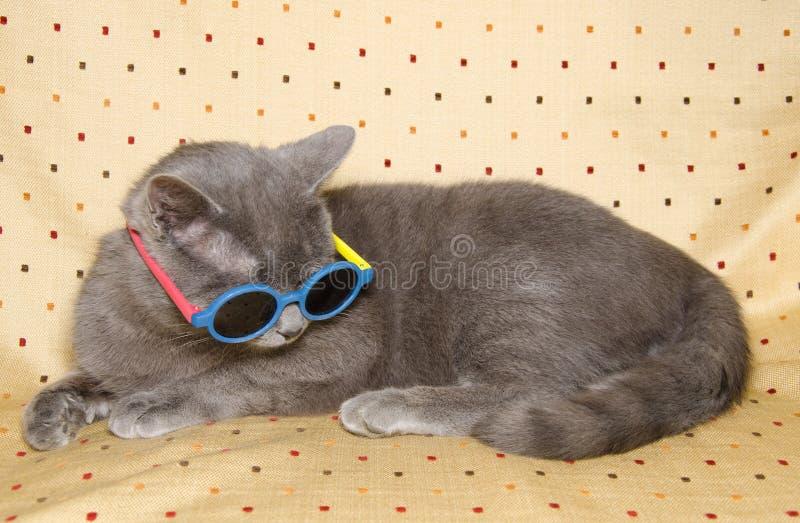 Komiczny kot z okularami przeciwsłonecznymi fotografia royalty free