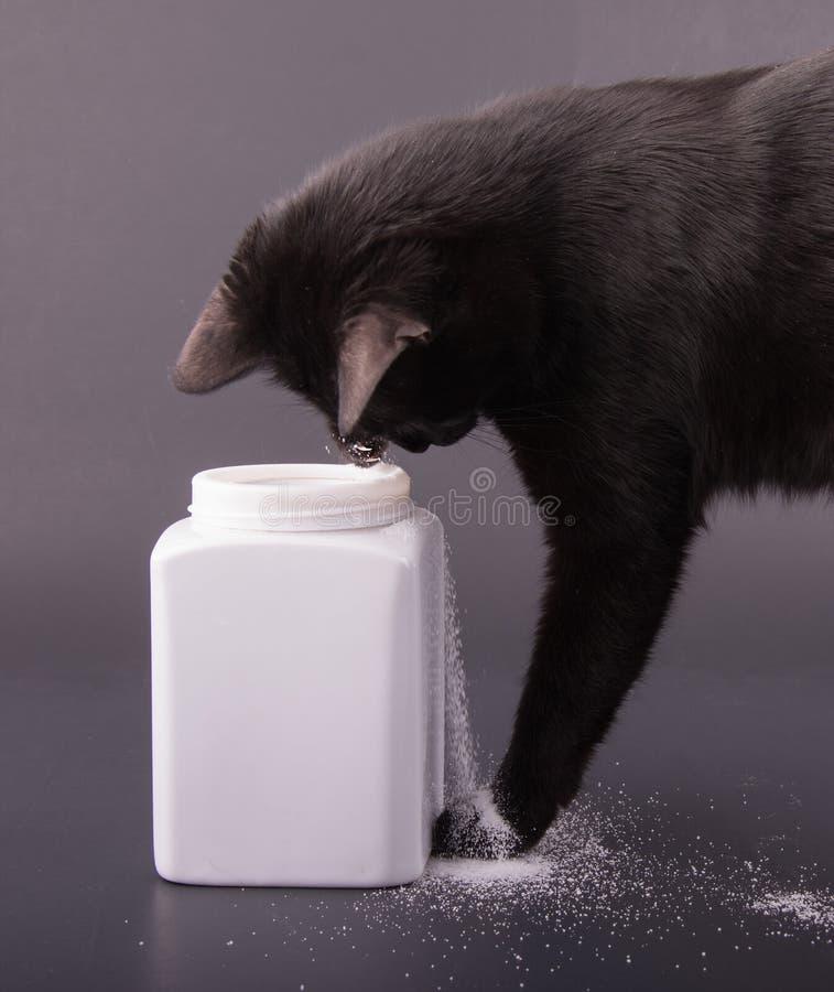 Komiczny wizerunek czarny kot rozlewa cukier z białego słoju zdjęcie royalty free