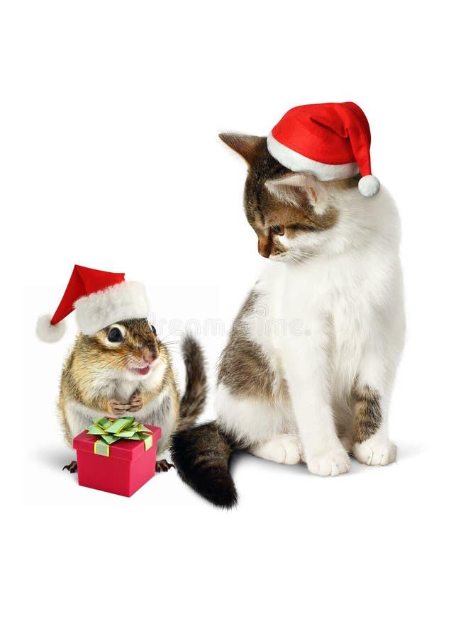 Komikerxmas-husdjur, rolig jordekorre och katt med den santa hatten arkivfoto