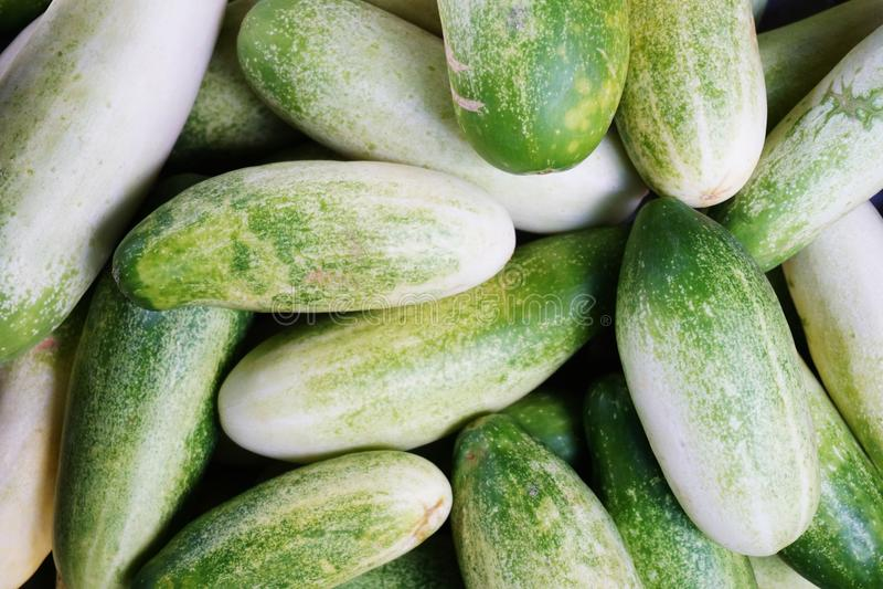 komkommer stock afbeelding