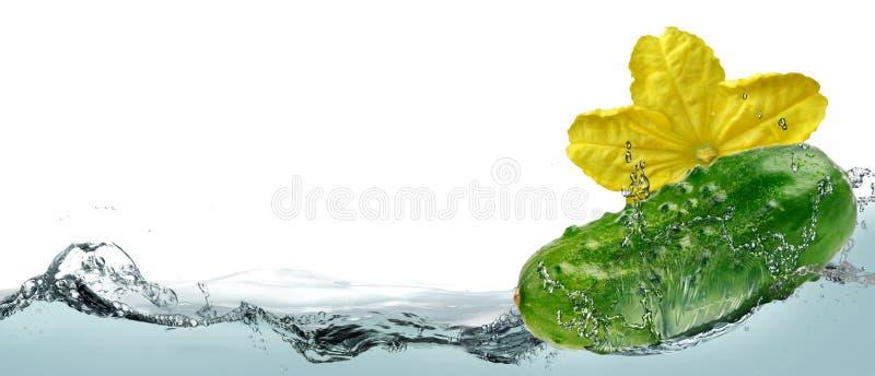 Komkommer in de nevel van water stock fotografie