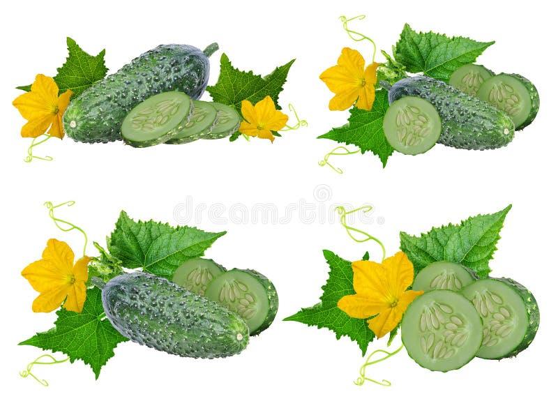 Komkommer die op wit wordt geïsoleerdt vector illustratie