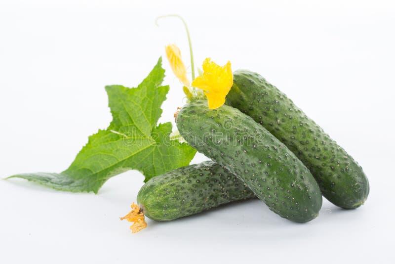 Komkommer met bladeren royalty-vrije stock afbeelding