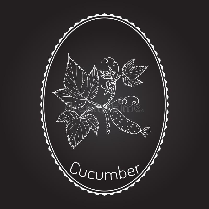 Komkommer met bloem en bladeren vector illustratie