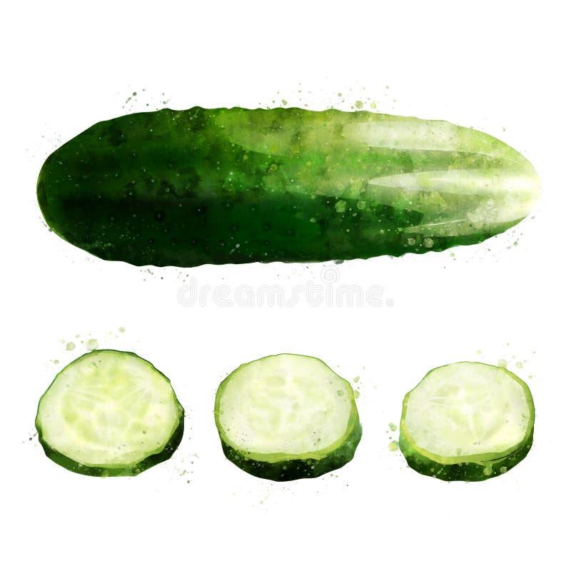 Komkommer op witte achtergrond De illustratie van de waterverf royalty-vrije illustratie