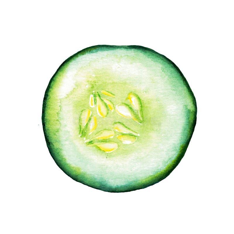 Komkommer van de waterverf de hand getrokken plak die op witte achtergrond wordt geïsoleerd stock foto's