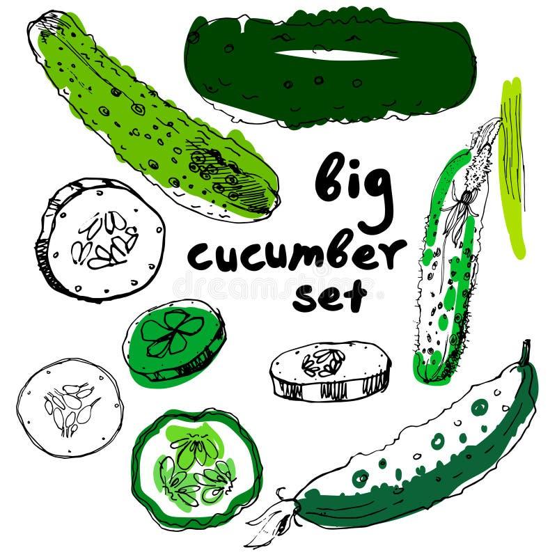 Komkommerhand getrokken vectorreeks vector illustratie