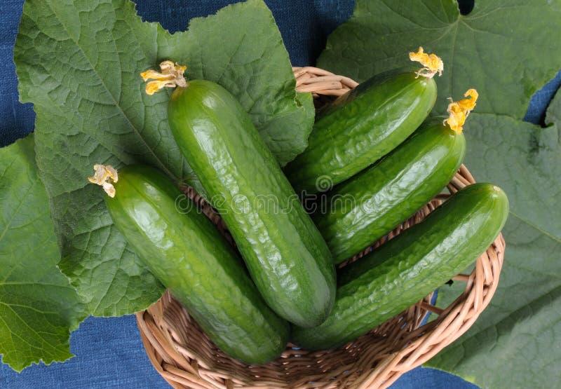 Komkommers royalty-vrije stock foto's