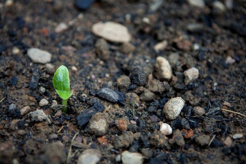 Komkommerspruit royalty-vrije stock afbeeldingen