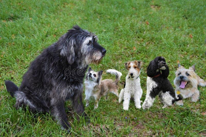 Komm på, spela med oss Grupp av hundkapplöpning i ängen fotografering för bildbyråer