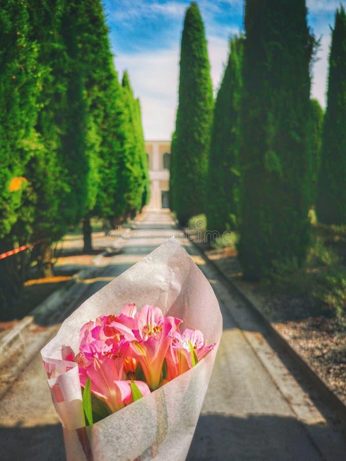 Komma med blommor till kyrkogården längs cypressen fodrad aveny royaltyfri foto