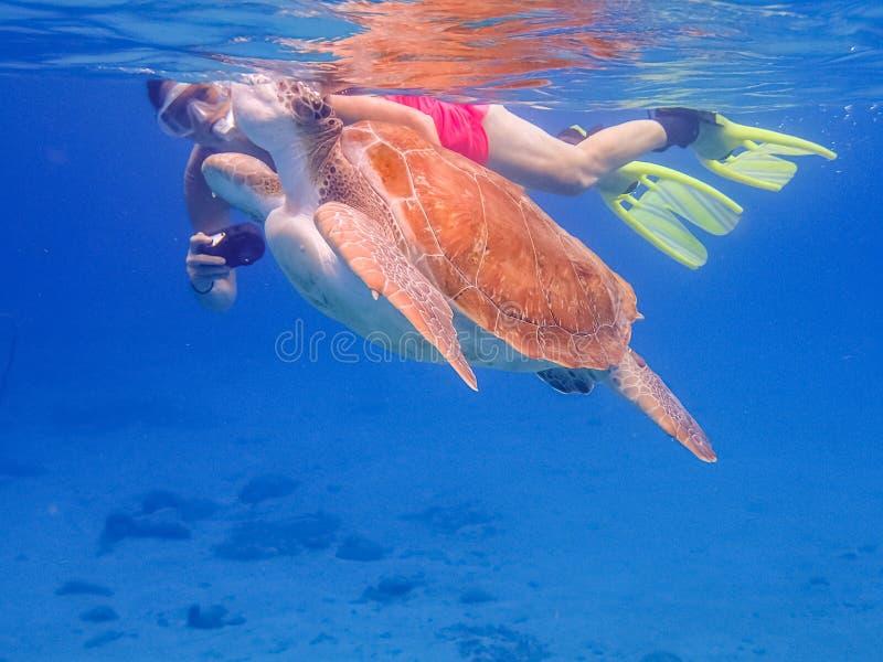Komma upp för luft som snorklar med sköldpaddaCuracao sikter royaltyfri fotografi