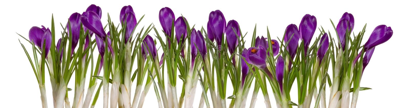 kommande blommor spring upp arkivfoton