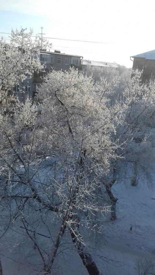 Kommen kommer våren, men på jordningen och på träd som täckas fortfarande i snö arkivbild