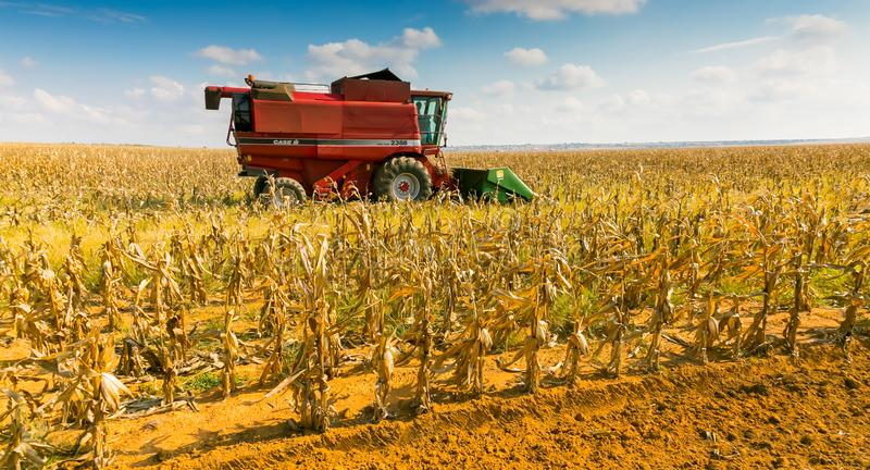 Kommersiellt majslantbruk i Afrika royaltyfri bild