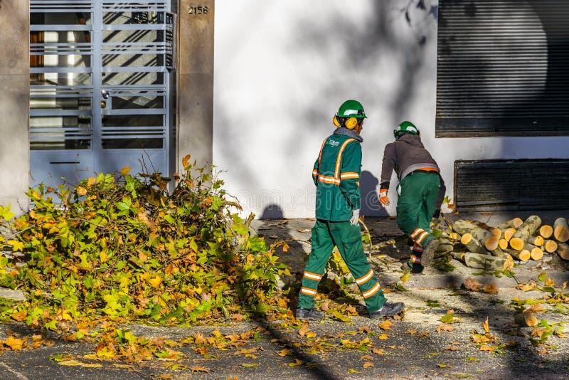 Kommunala arbetare som klipper träd, Montevideo, Uruguay royaltyfria foton