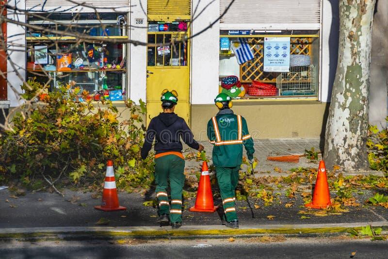 Kommunala arbetare som klipper träd, Montevideo, Uruguay arkivfoto
