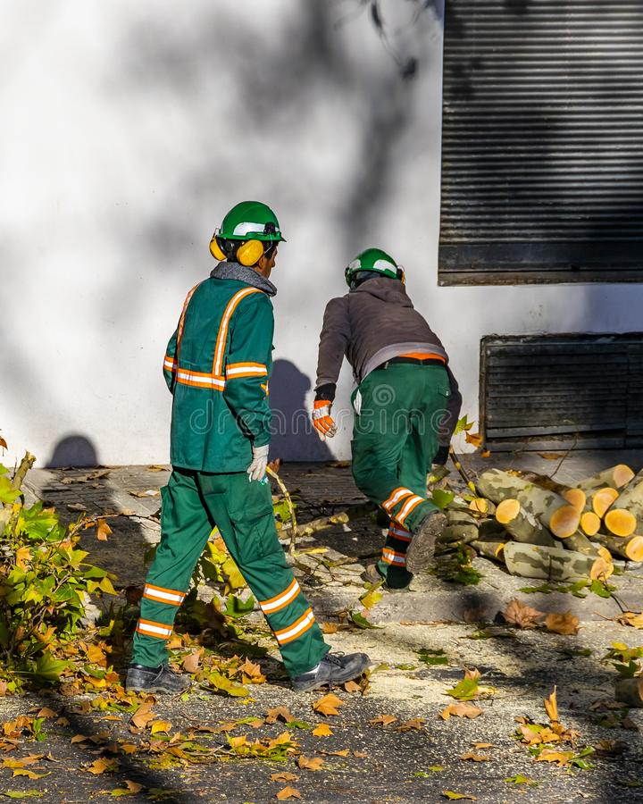 Kommunala arbetare som klipper träd, Montevideo, Uruguay fotografering för bildbyråer