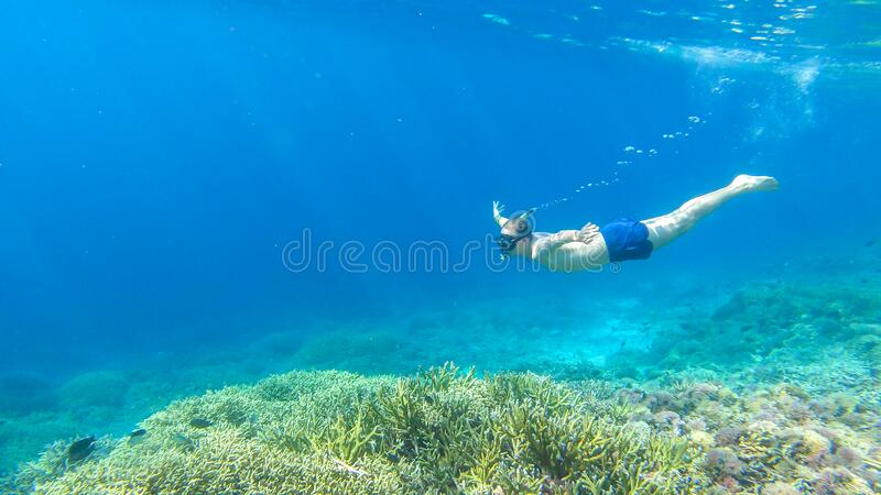 Komodo - A man snorkelling on a coral reef. A man in masker and fins snorkelling in a vivid coral reef in Komodo National Park, Indonesia. The man is diving to royalty free stock photo