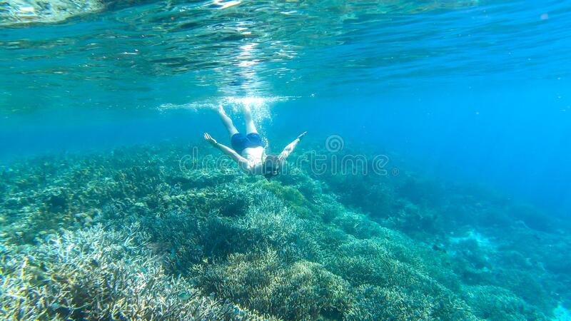 Komodo - A man snorkelling on a coral reef. A man in masker and fins snorkelling in a vivid coral reef in Komodo National Park, Indonesia. The man is diving to royalty free stock image