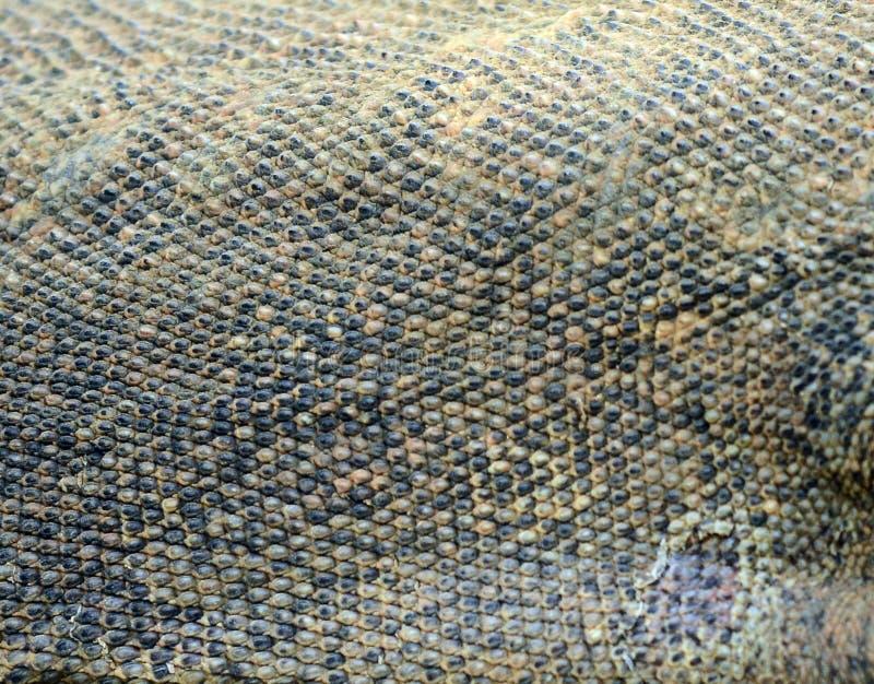 Komodo smoka skóra zamknięta w górę obraz stock