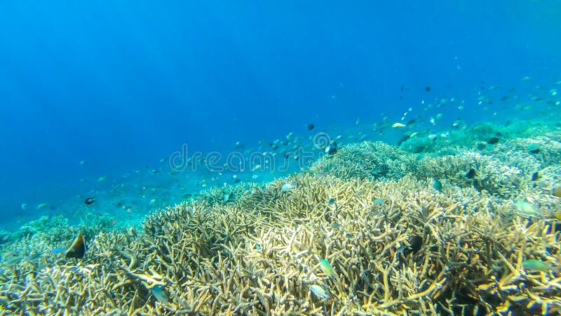 Komodo - Vivid coral reef. A vivid coral reef in Komodo National Park, Indonesia. There are some fish swimming around the coral formation. Crystal clear water royalty free stock photo