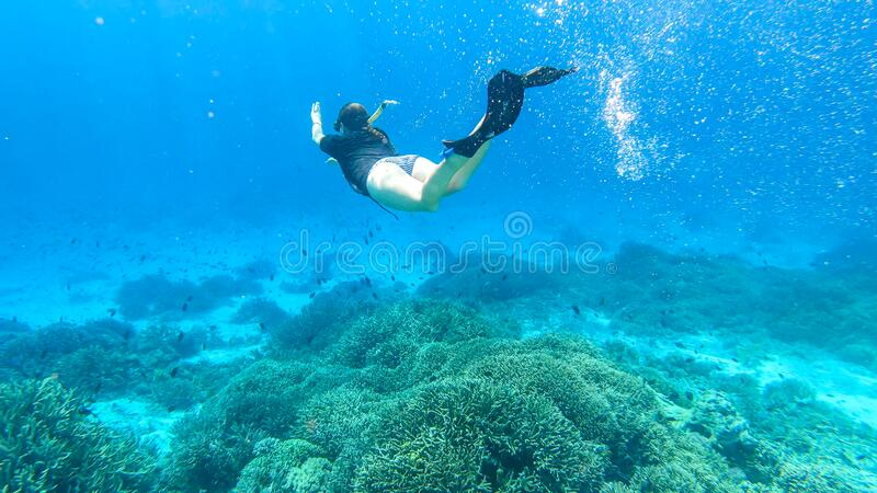 Komodo - A woman snorkelling on a coral reef. A woman in masker and fins snorkelling in a vivid coral reef in Komodo National Park, Indonesia. She is diving to stock images