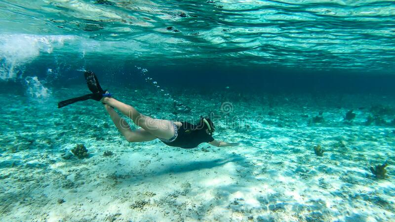 Komodo - A woman snorkelling on a coral reef. A woman in masker and fins snorkelling in a vivid coral reef in Komodo National Park, Indonesia. She is diving to stock photography