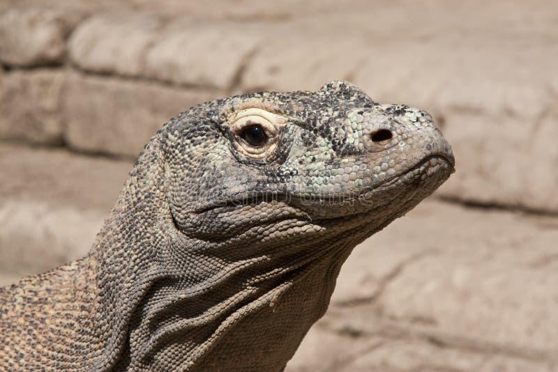 Komodoensis de Varanus photo stock