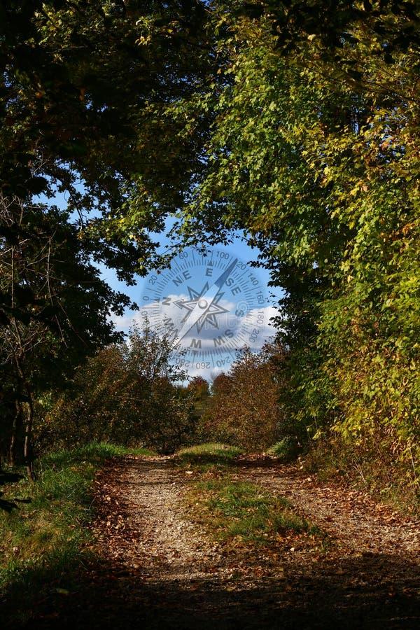 Kompaß und die Straße im Wald stockbild