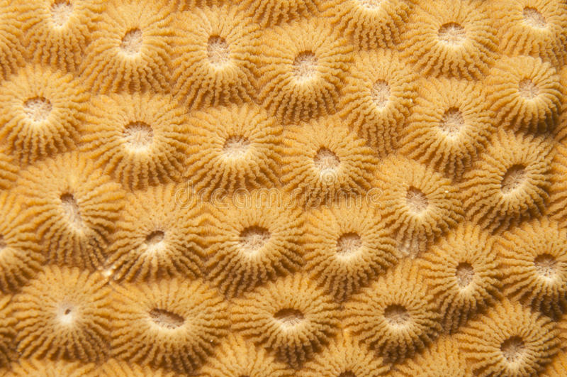 kompakt koralltextur arkivfoton