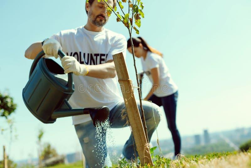 Kompetent trädgårdsmästare som häller det unga trädet royaltyfri foto
