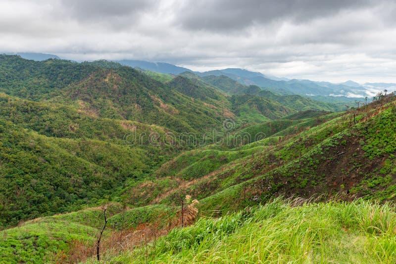 Komplexitet av berglandskapet och trädmångfald av skogen med härliga gräs för låga moln överst - i förgrund royaltyfri bild