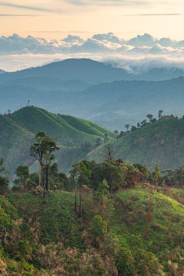 Komplexitet av berglandskapet och trädmångfald av skogen med härliga låga moln överst royaltyfri foto