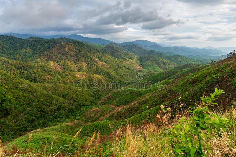 Komplexitet av berglandskapet och trädmångfald av skogen med härliga låga moln överst - ogräs och buskar i förgrund royaltyfri fotografi