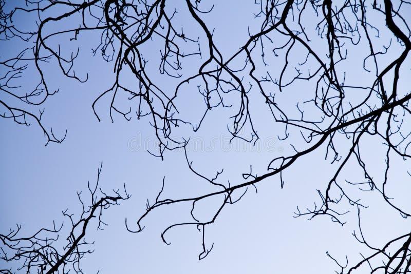 Kompliziertheit auf Baumasten stockbilder
