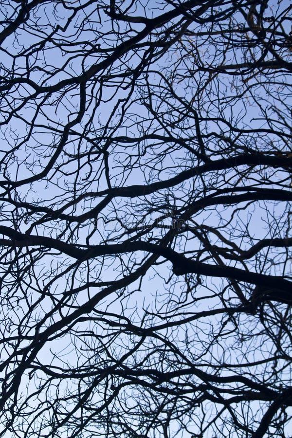 Kompliziertheit auf Baumasten stockbild