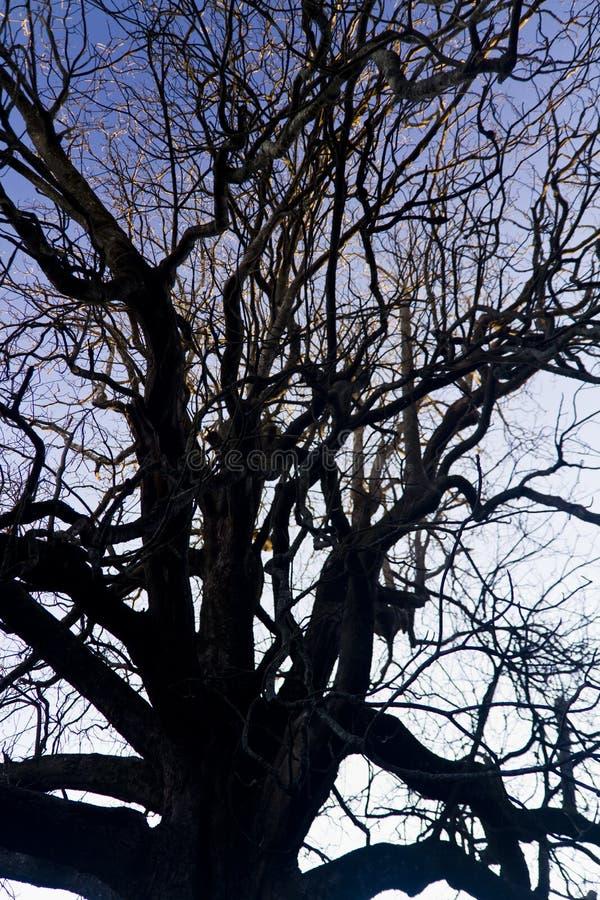 Kompliziertheit auf Baumasten stockfoto