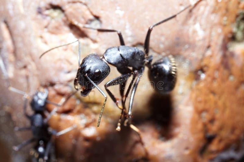 Komplott för två myror royaltyfri fotografi