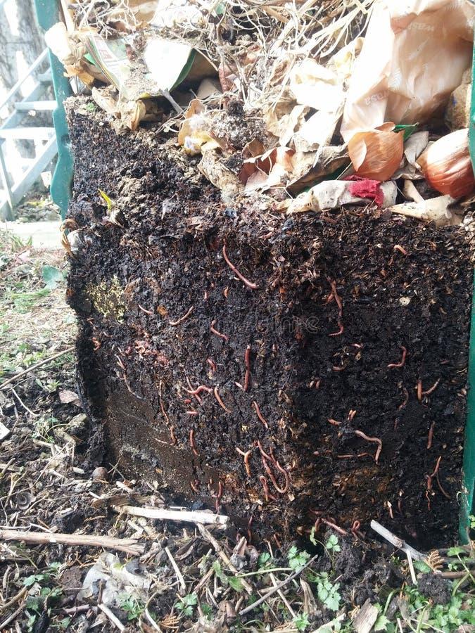 Komposthaufen stockfotografie
