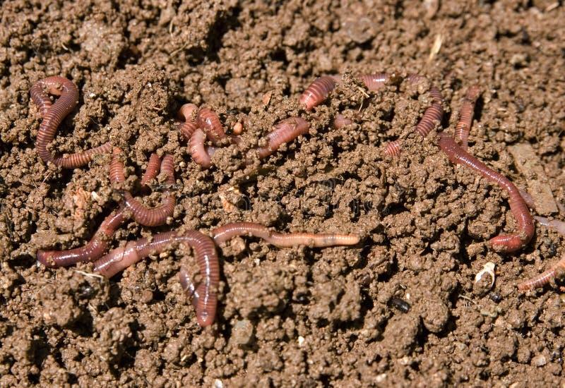 Kompostierung der Gartenendlosschrauben lizenzfreie stockfotos