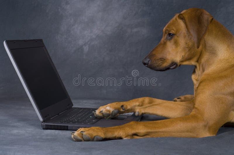 komputeru psa używać zdjęcia royalty free
