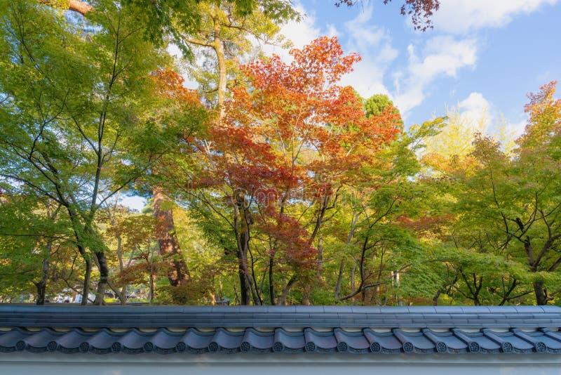 Komst van de herfst, kleurrijk de veranderde bomenseizoen en traditionele omheining in Japan royalty-vrije stock fotografie