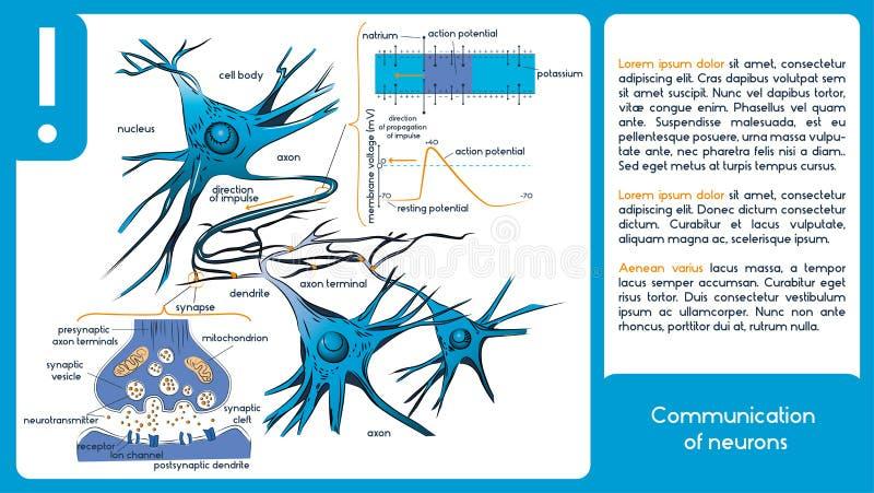 Komunikacja neurony royalty ilustracja