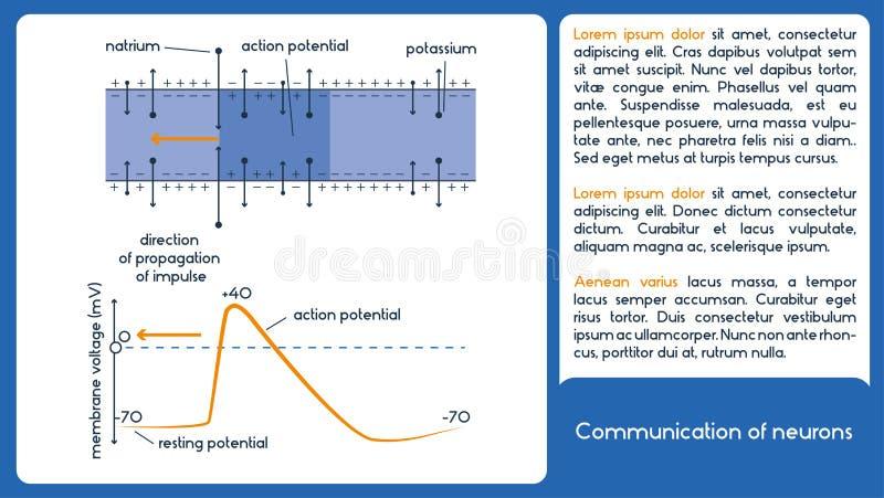 Komunikacja neurony Błona woltaż royalty ilustracja