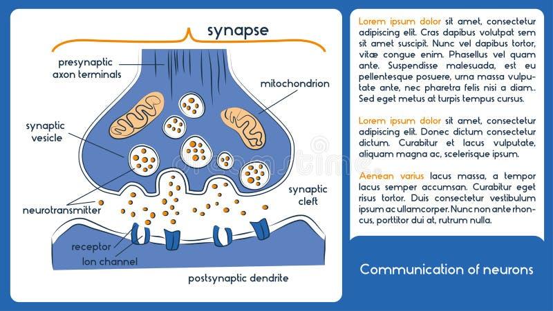 Komunikacja neurony neurotransmitters royalty ilustracja
