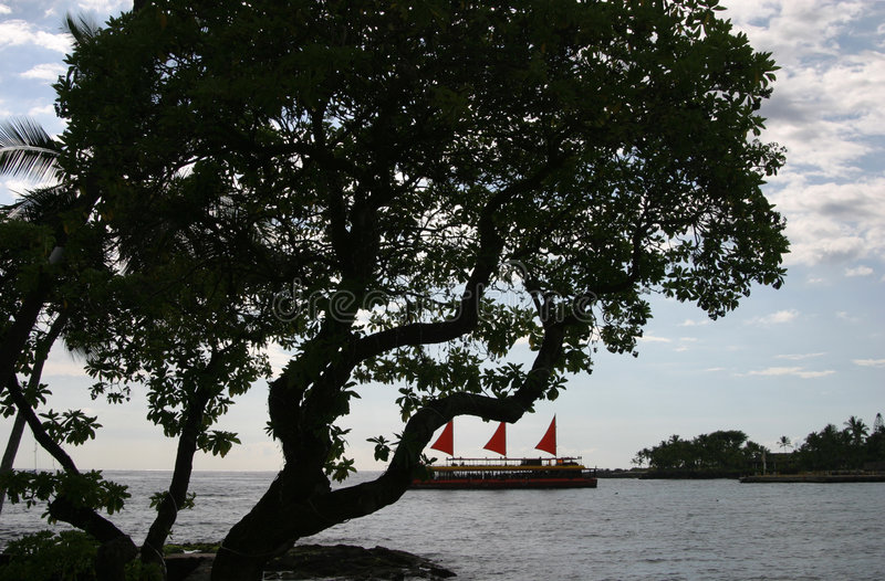 Download Kona Tree stock photo. Image of branches, leaves, boat, island - 39314