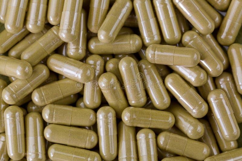 Koncentrerade växt- kapslar av pulver för Moringa bladfiber, som di royaltyfria foton